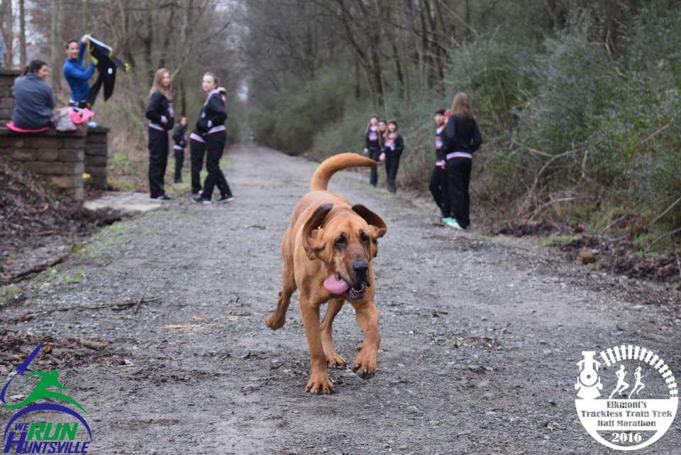 Dog soldiers on during 2016 Elkmont Trackless Train Trek Half Marathon