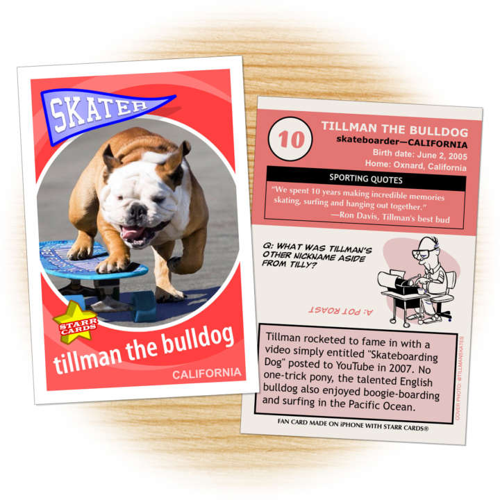 Fan card of Tillman the Skateboarding Bulldog