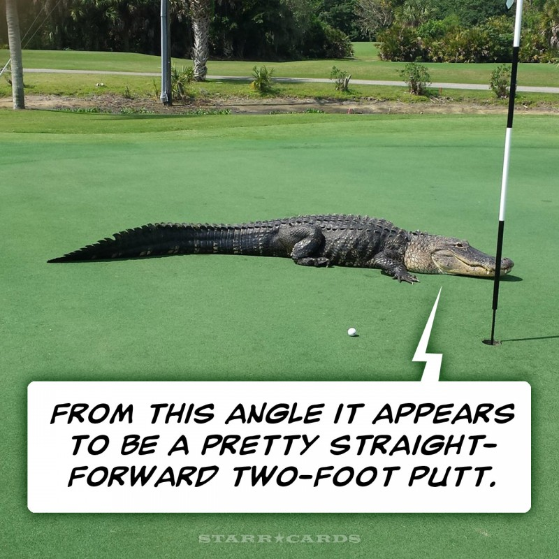 Gator on the green at Myakka Pines golf course