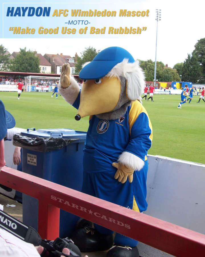 Haydon: Lovable Womble and AFC Wimbledon mascot