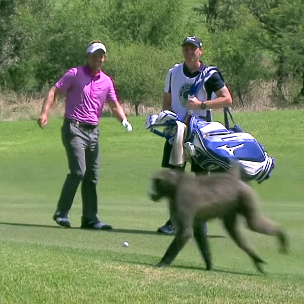 Luke Donald startled by baboon in South Africa