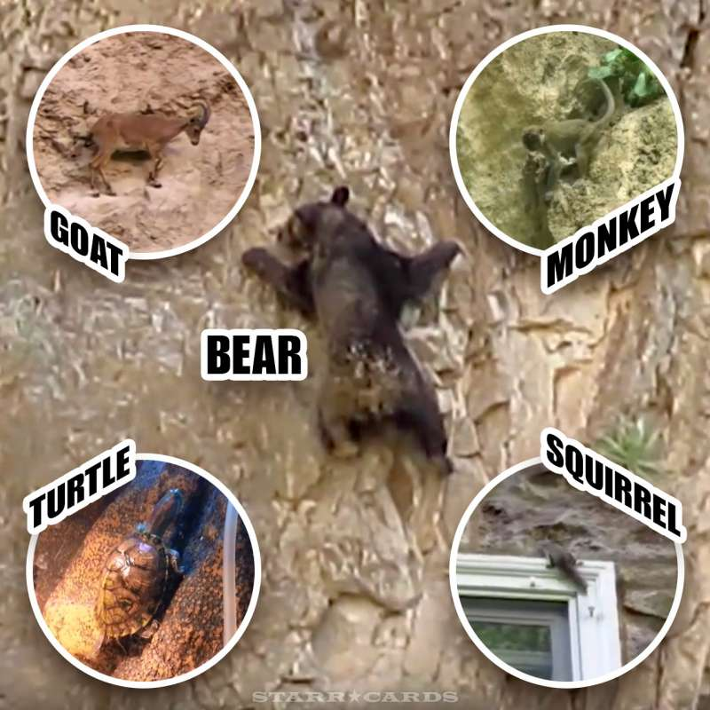 Rock climbing animals including a bear, goat, monkey, turtle and squirrel