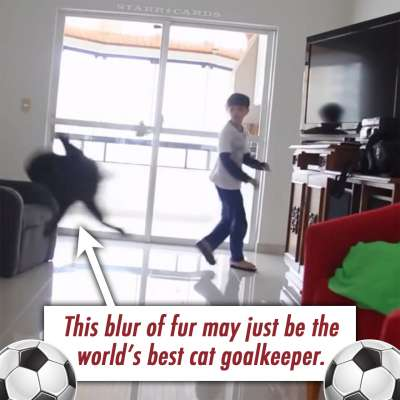 Soccer cat plays goalkeeper as well as Gianluigi Buffon and Iker Casillas