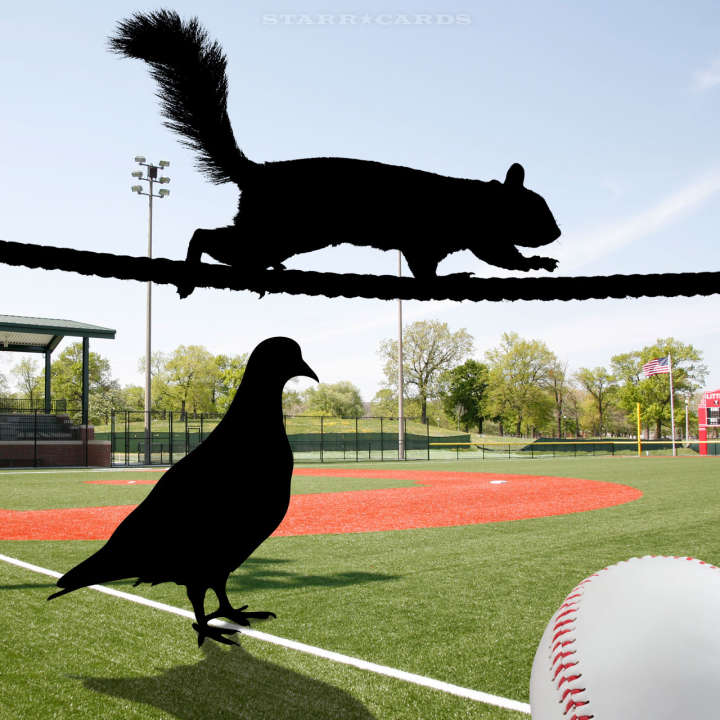 Squirrel dive bombs Phillies dugout, while pigeon takes over Coors Field