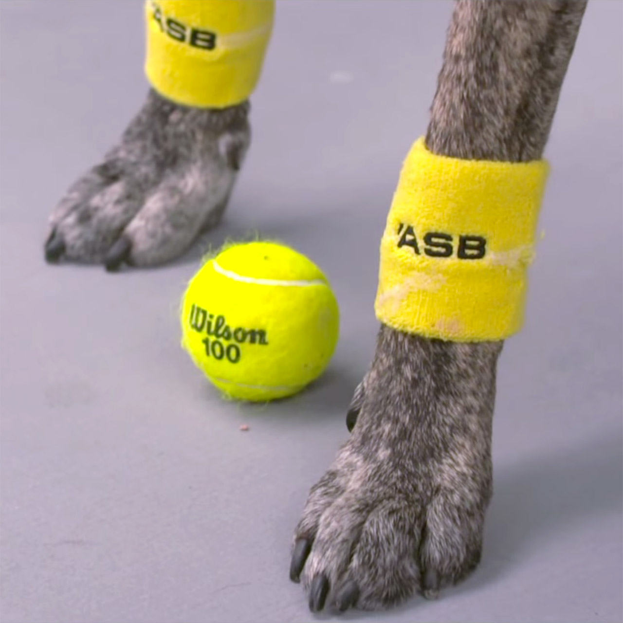 Venus Williams adores the ball dogs at the ASB Classic in New Zealand
